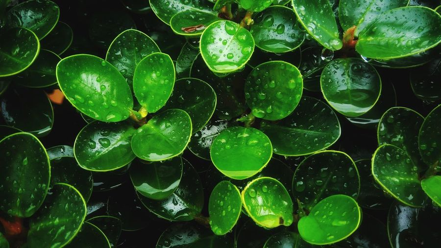 Full frame shot of water drops on leaves