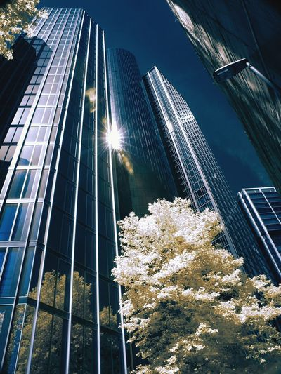 Infrared Photo Frankfurt Am Main FirstEyeEmPic EyeEm Selects Germany Photos Germany Photos Official EyeEm © IR Infrared Photography Infrared Landscape First Eyeem Photo Illuminated No People Tree Low Angle View Outdoors Nature City Architecture Sky