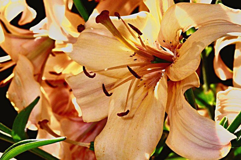 Plant Flowering