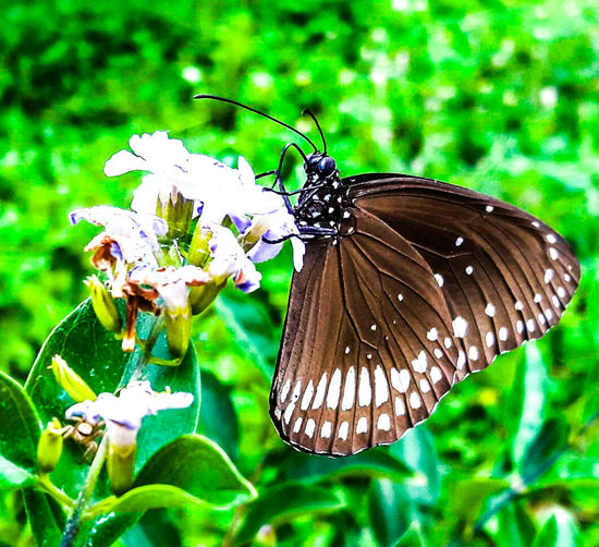 Fly fly amul fly Butterfly ❤ Butterfly Butterfly Collection Butterfly Macro Butterfly - Insect Black Butterfly Brown Butterfly Flower Flower Photography