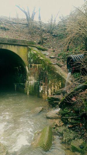 Just the entrance to wonderland Wonderland Lost Wolf Misanthropy Home Sadness Death Silence Alone Broken First Eyeem Photo