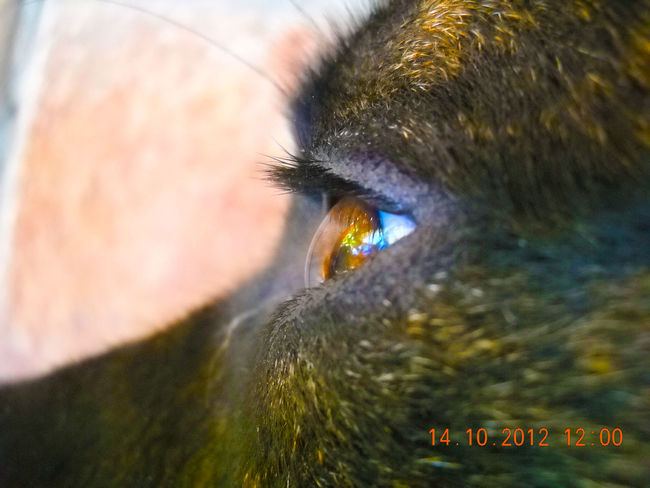 Dog Dog Eye Eye I Miss Him :(  Tiny Details