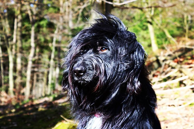 One Animal Animal Themes Mammal Dog Pets Focus On Foreground Domestic Animals Black Color Outdoors No People Forest Day Portrait Close-up Nature