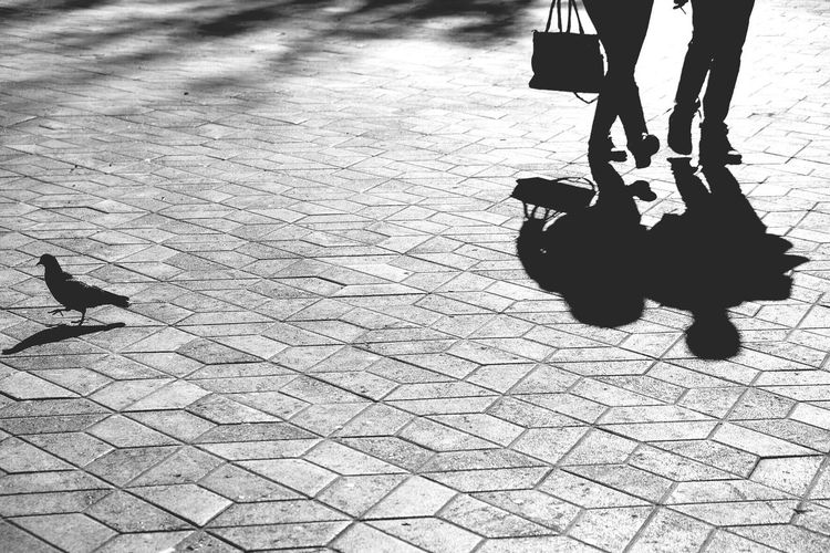 The City Light Baby Stroller Real People Shadow Low Section Cobblestone High Angle View Outdoors Two People Lifestyles Baby Carriage Footpath Human Leg Day Men Push Scooter Disability  The Street Photographer - 2017 EyeEm Awards Adventures In The City The Street Photographer - 2018 EyeEm Awards
