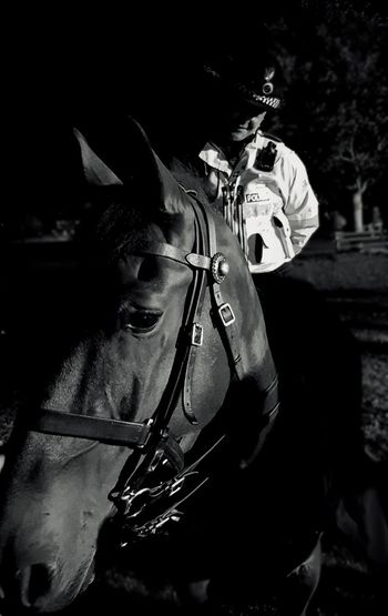 One Person Only Women Black Background Close-up Policewoman Police Horse Horse Photography  Bristol England Black And White Friday