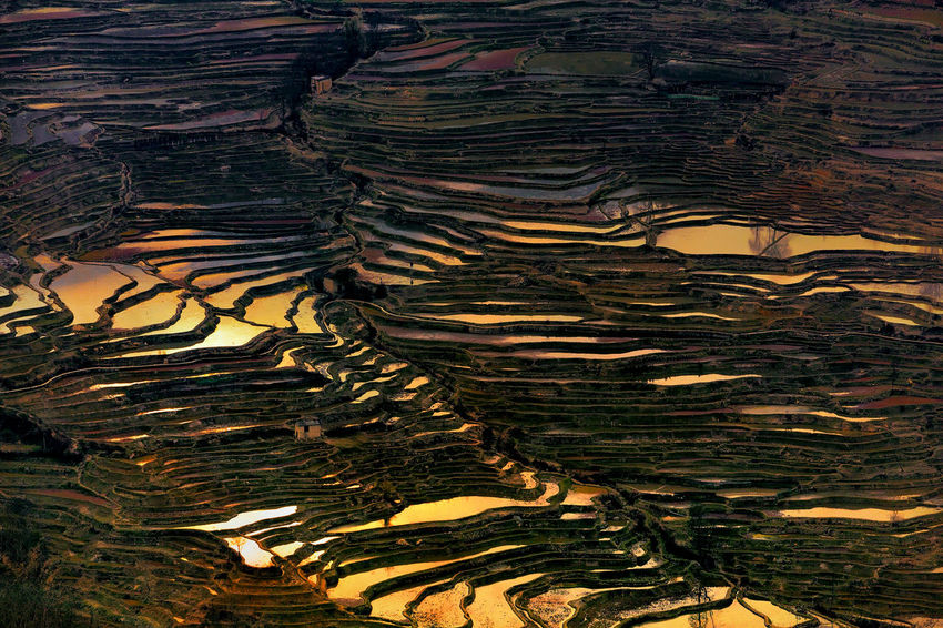 Detail of rice terrace Agriculture Curve Nature Reflection Serenity Textured  Tourist World Heritage Yuanyang Terraced Fields Beauty In Nature China Colorful Countryside Cultures Detail Harvest Landscape Outdoors Pattern Rice Terraces Scenics Travel Destinations Water Yunnan Shades Of Winter