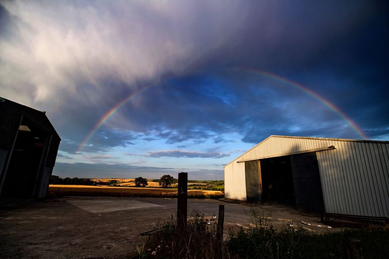 Rainbow over buildings in field against sky at sunset