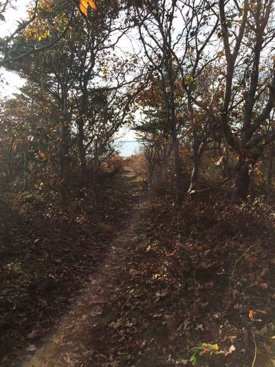 Path to a quiet beach on Cape Cod. Tree Plant Tranquility Forest Land Footpath