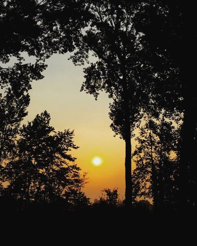 Tree Nature Sunset Sun Nature Tranquility Ellytrotter Beauty In Nature