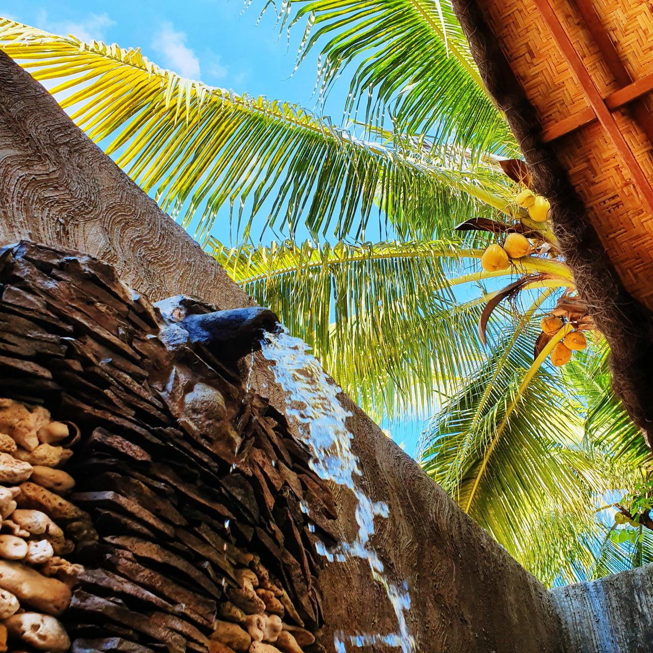 LOW ANGLE VIEW OF BIRD ON PALM TREE
