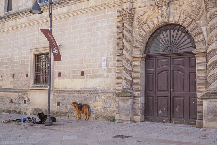 Homeless Errant Stray Dog Animal Themes Architecture Brick Wall Building Exterior Built Structure Day Dog Domestic Animals Italy Mammal Matera No People One Animal Outdoors Pets Architecture Domestic Animal Entrance Door Canine Building Vertebrate Window Wall - Building Feature