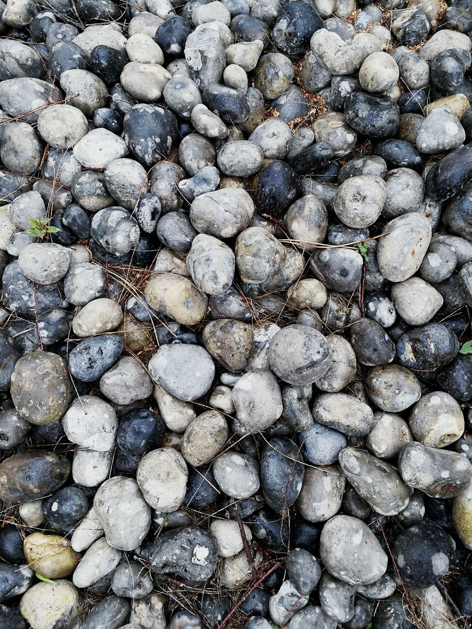 full frame, abundance, large group of objects, pebble, nature, no people, shore, pebble beach, backgrounds, beach, outdoors, day, close-up