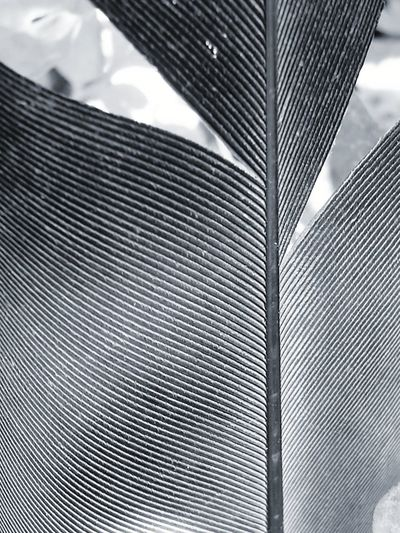Background Feather  Part Of Black And White Full Frame Lines Repetition Abstract Close-up Close Up No People Modern Backgrounds Pattern Textured  Close-up