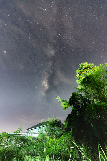 Low angle view of trees against sky at night