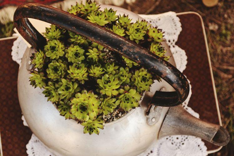 High Angle View Of Plants Growing On Teapot On Table