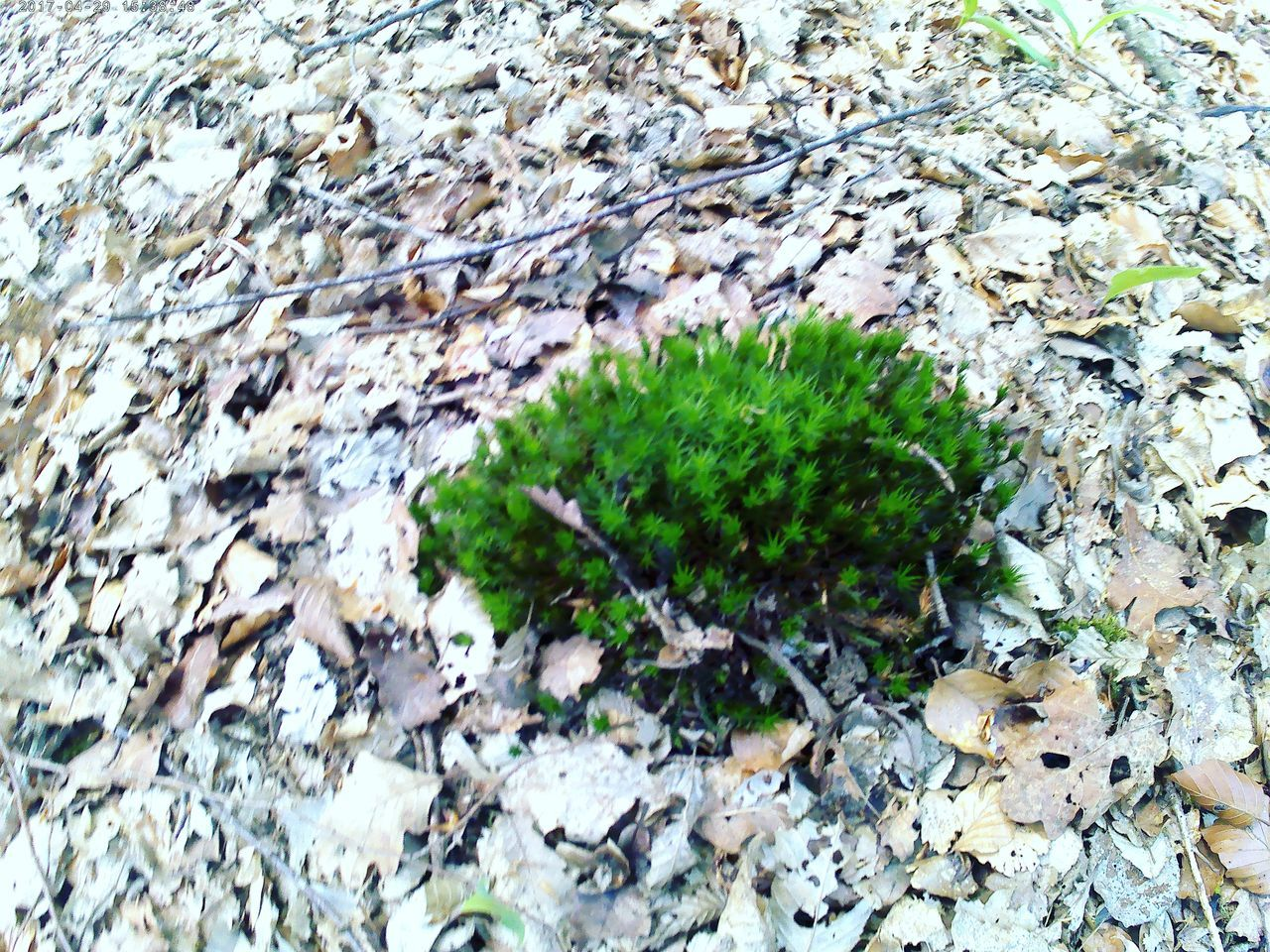 growth, nature, plant, no people, outdoors, close-up, day