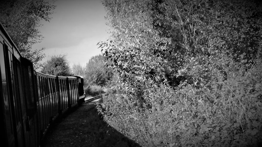 Train Arriving into New Romney Station 2017 2017 2017 Year Black & White Black & White Photography England, UK Great Britain Kent UK RH&DR RHDR Romney Hythe And Dymchurch Railway Romney, Hythe & Dymchurch Railway United Kingdom Black&white Blackandwhite Blackandwhite Photography Day Growth Kent England Nature No People Outdoors Plant Sky The Way Forward Tree