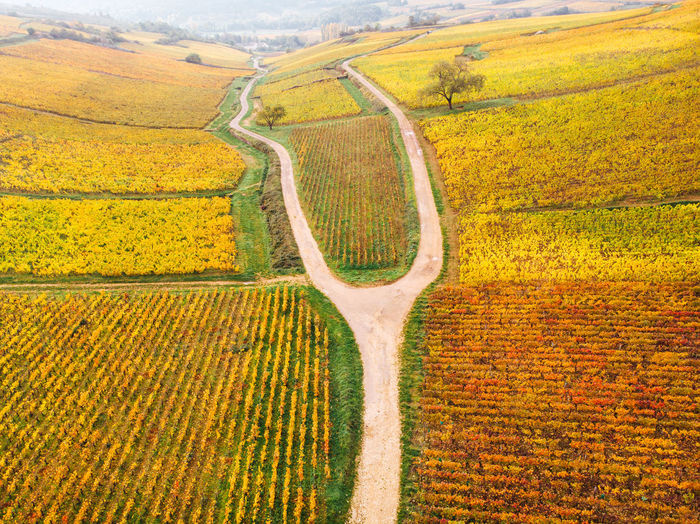 Scenic view of agricultural field. aerial view of vineyards in autumn i' burgundy