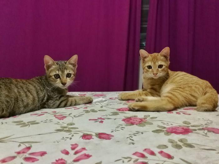 Kittens Moment