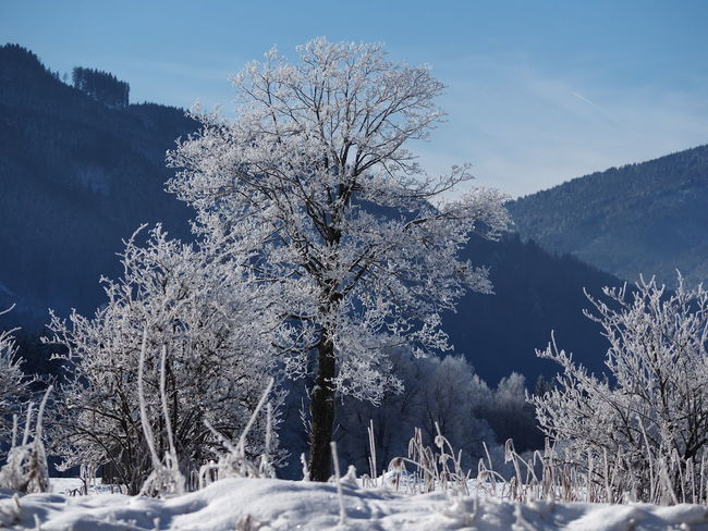 Bare Tree Beauty In Nature Branch Cold Cold Temperature Day Frozen Landscape Nature No People Outdoors Scenics Sky Snow Tranquil Scene Tranquility Tree Weather Winter