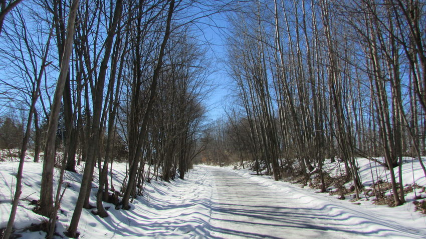 Taking Photos Beauty In Nature Bright Blue Sky! Cold Temperature White Pine Trail Surrounded By Trees Quiet Moments Cadillac Michigan