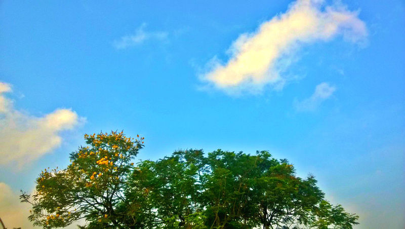 at the top of a tree..... Beauty In Nature Blue Cloud Eyeem Of Chennai EyeEm Of The Week Green High Section Low Angle View No People Scenics Sky Treetop
