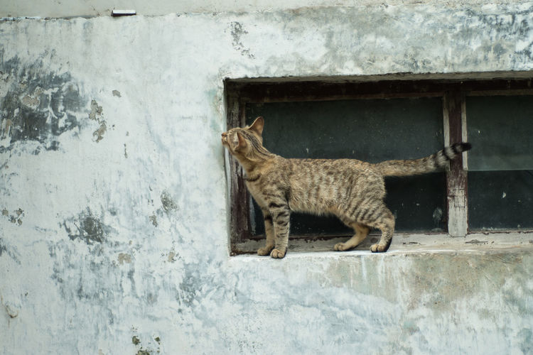 Side view of a cat against wall