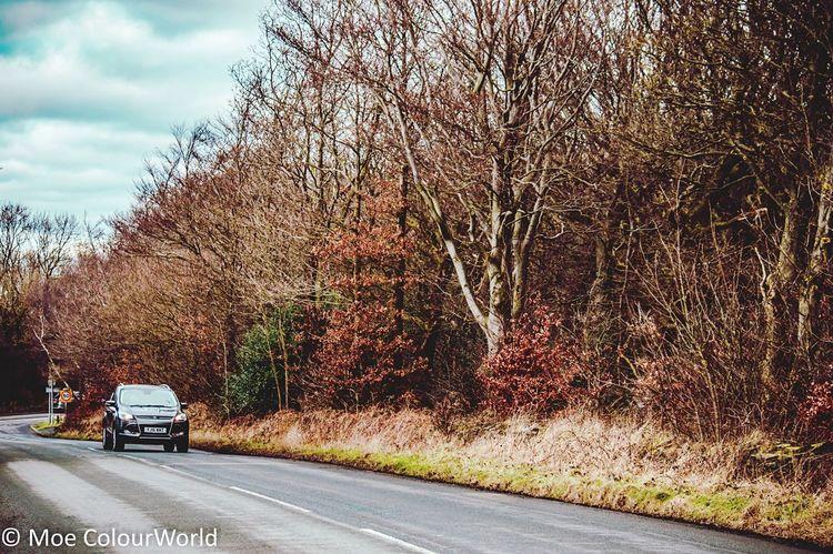 Road Tree Car Transportation Land Vehicle Day Outdoors No People Bare Tree Sky Nature Fall #autumn #falltime #season #seasons #instafall #instagood #instaautumn #photooftheday #leaf #foliage #colorful #orange #red #autumnweather #fallweather #nature #beautiful #beauty #amazing Photography Huddersfield