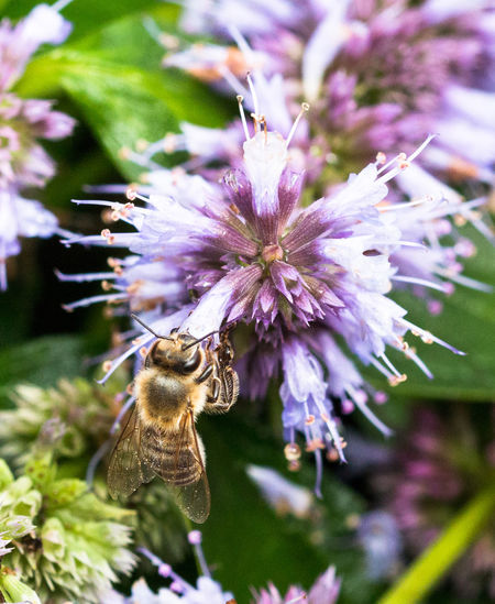 Bees Makro Animal Themes Bee Flower Fragility Insect Insects  Macro Nature Outdoors