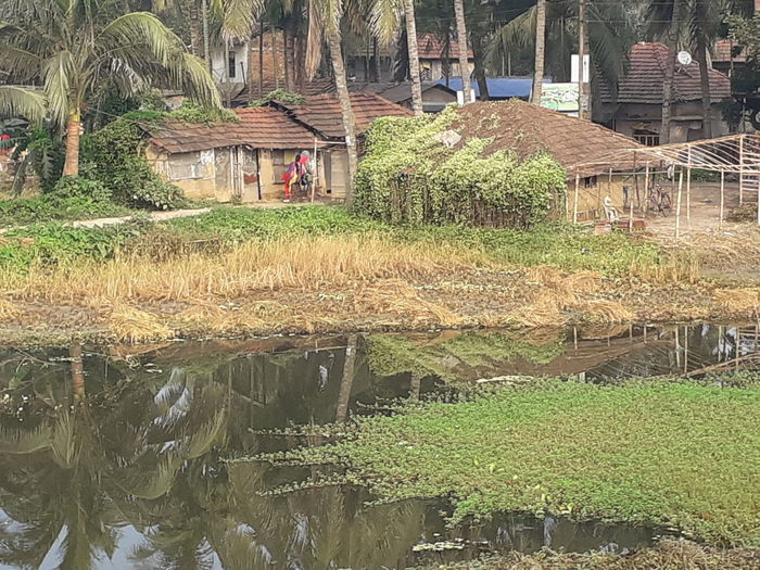 Plants and houses by canal