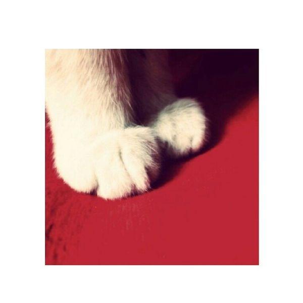 Meow! Kitty Cat My Kitty Cat