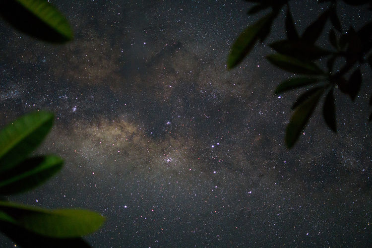 Astronomy Beauty In Nature Constellation Galaxy Leaf Milky Way Milkyway Nature Night No People Outdoors Scenics Sky Space Star - Space