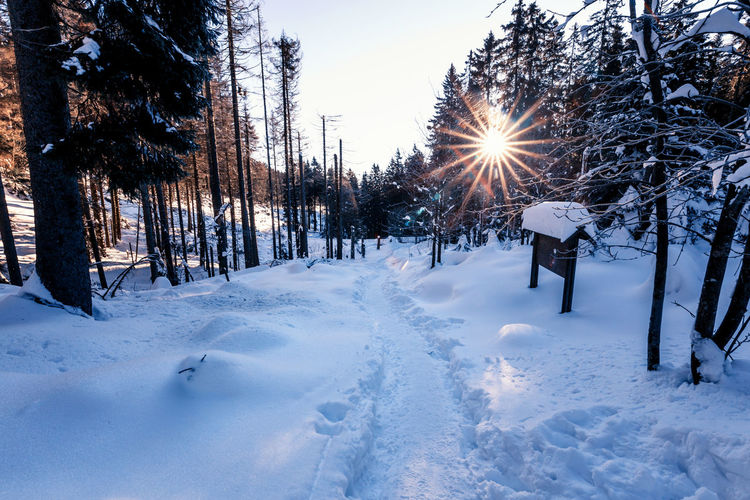 Snow Cold Temperature Winter Tree Covering Land Nature Beauty In Nature Plant Field Tranquility White Color Sky Tranquil Scene Frozen Scenics - Nature Non-urban Scene No People Day Outdoors Snowing
