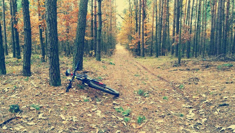 Las jesienny Forest First Eyeem Photo