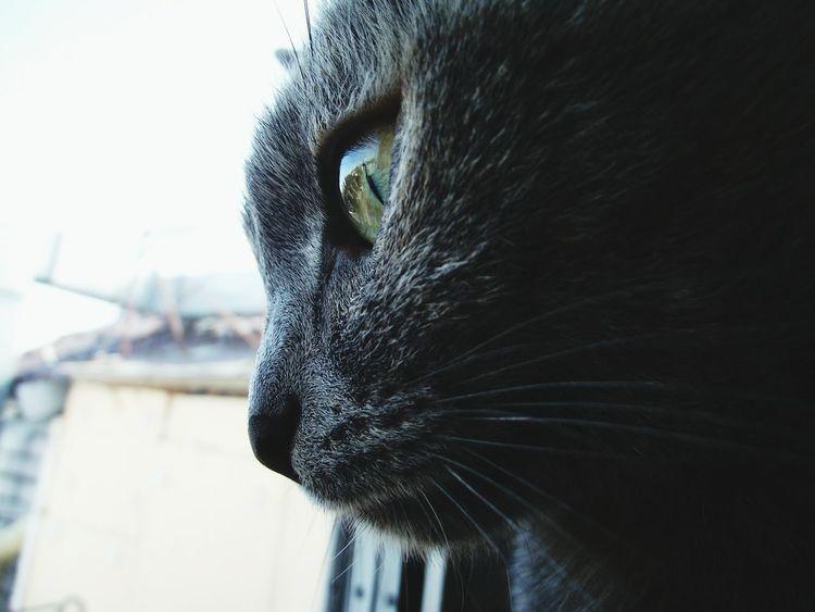 Cat Cat Face Cat Face Macro Macro Macro Photography Macro Cat Cat Macro