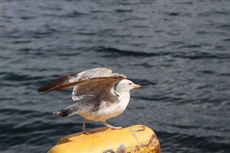 Close-up of seagull perching on shore