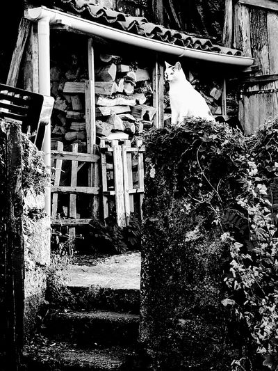 Cat black and white Nature Leynhac Village Countryside Auvergne Middle Of France