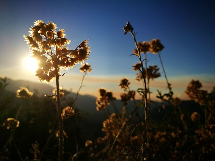 Close-up of flowers growing on plant against sky during sunset