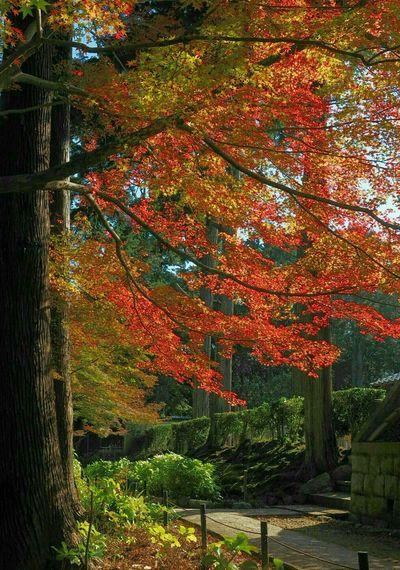 Autumnbeauty Autumn Leaves at Shin-nyo-do 真如堂 Kyoto, Japan