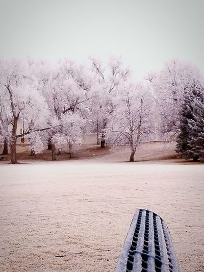 Eyeem Photography Beauty In Nature Cold Temperature Winter No People Frosted Trees Taking Photos Colorado. Spgs CO