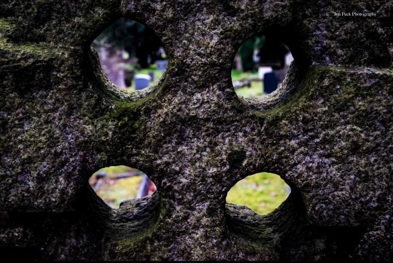 tree trunk, hole, moss, close-up, tree, textured, no people, focus on foreground, day, outdoors, bark, nature, animal themes