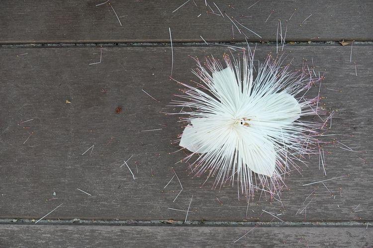 High angle view of dandelion on floor