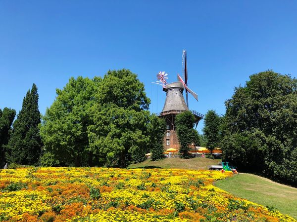 • Summertime in the City of Bremen • Colorful Park - Man Made Space Trees Urbanphotography Urban Landscape Blue Sky Flowers Mobilephotography Summertime Summer Historic Site Germany Bremen