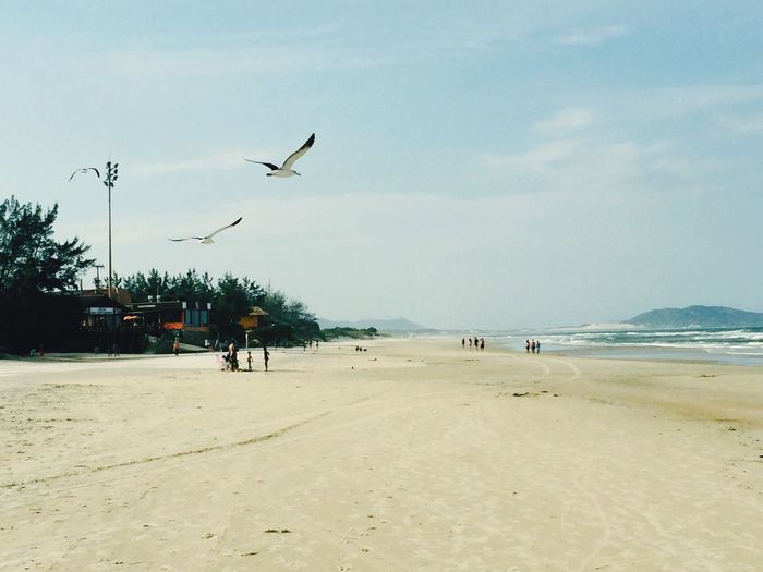 Beach Beautiful Birds Brazil Floripa