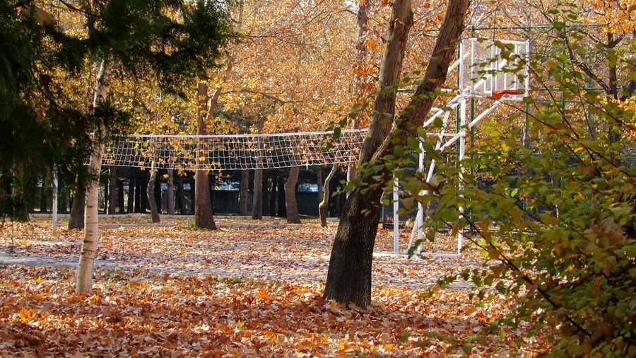 Autumn trees on playing field