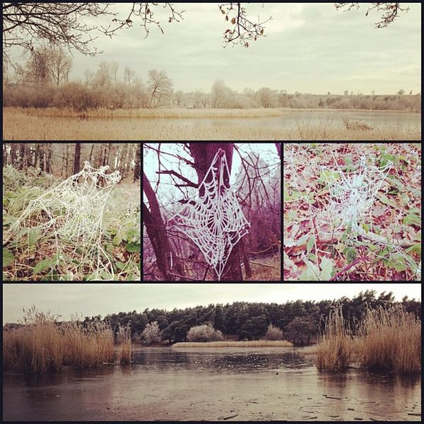 Frosty Frensham run. Not like me to say this... But poor spiders!