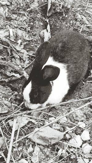 토끼가 안도망간다 토끼 Rabbit Animal