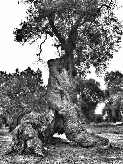 Monopoli Apúlia Puglia South Italy Oldtree Atmosphere Mistycal No People Nature Outdoors Day Tree Sitting Animal Themes Mammal Close-up Leopard Earth Puglia_lovers PugliaMia