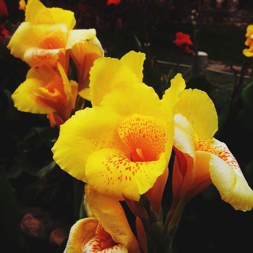 Anseio pelo dia em que nem mesmo as flores sofrerão as consequências do pecado. VoltaLogoJesus