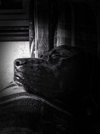 #Light sleeping. VSCO Black And White Vscocam Dog
